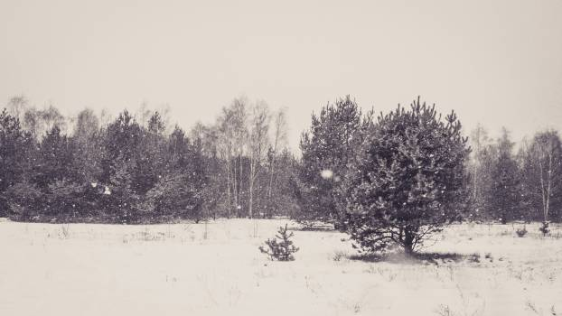 Black and white cold forest grey #99524
