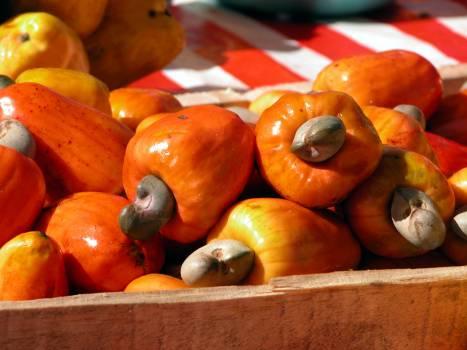 Brazil cashew nuts fruit Free Photo