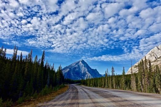 Asphalt conifer distance drive Free Photo