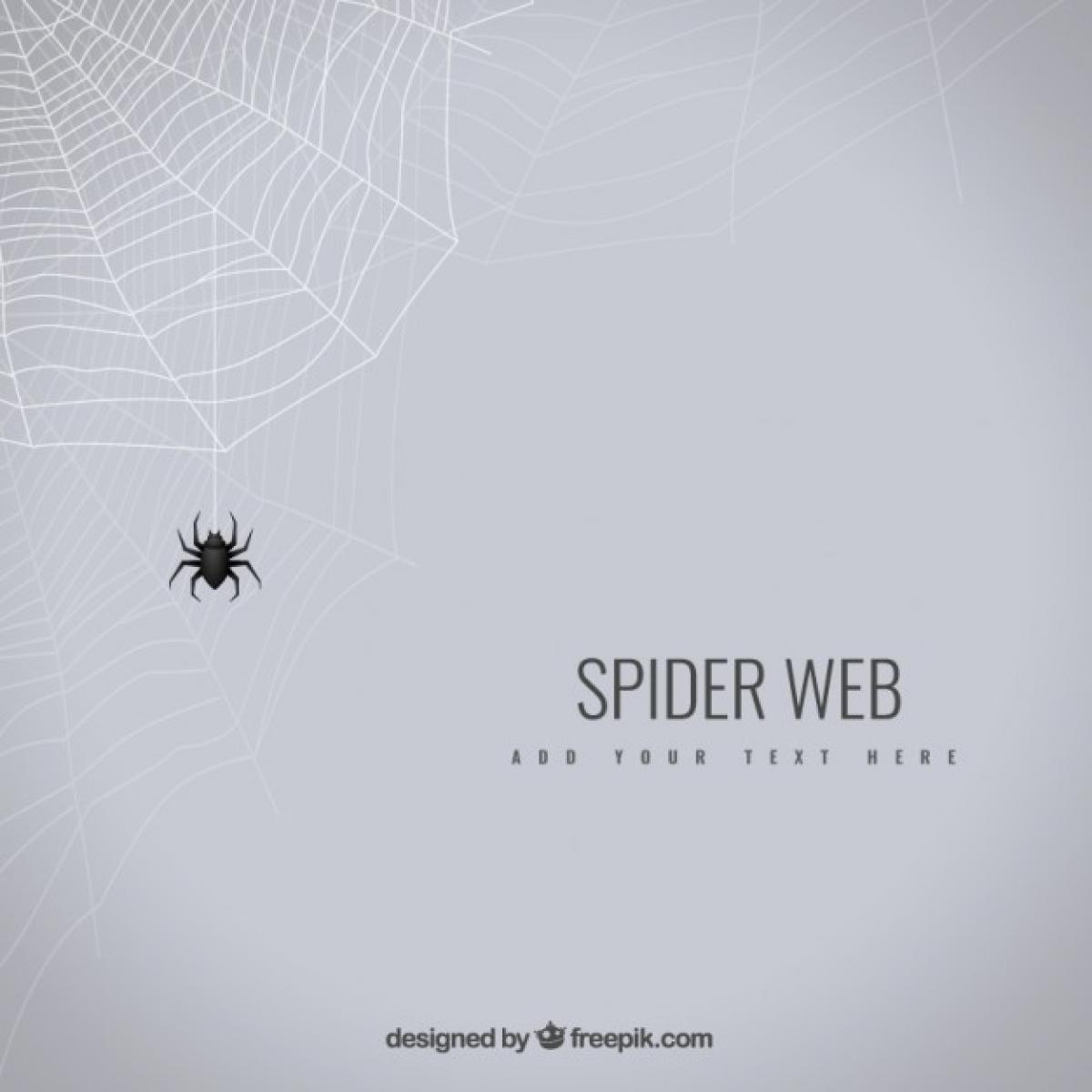 Spider web Web Trap #330648