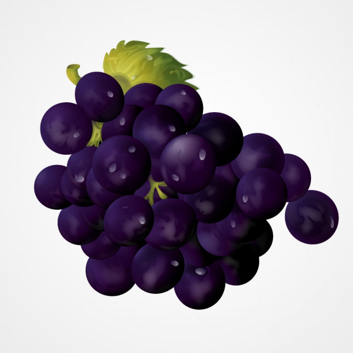 Grape Vineyard Fruit