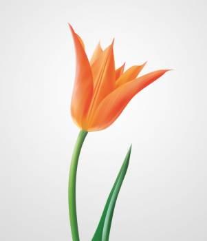 Tulip Plant Icon #331599