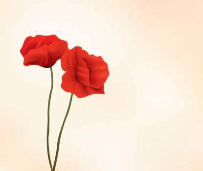 Bud Flower Blossom #331648