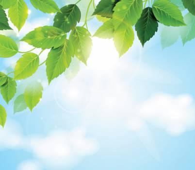 Leaf Tree Leaves Free Photo