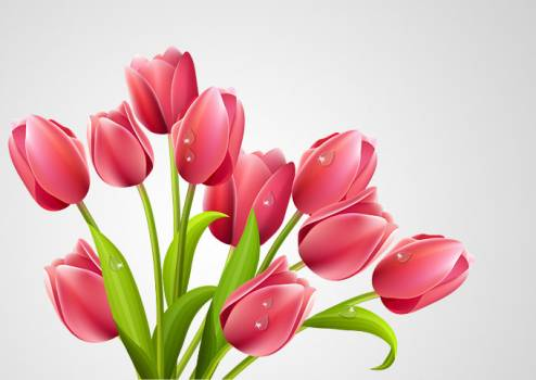 Tulip Pink Icon #331688